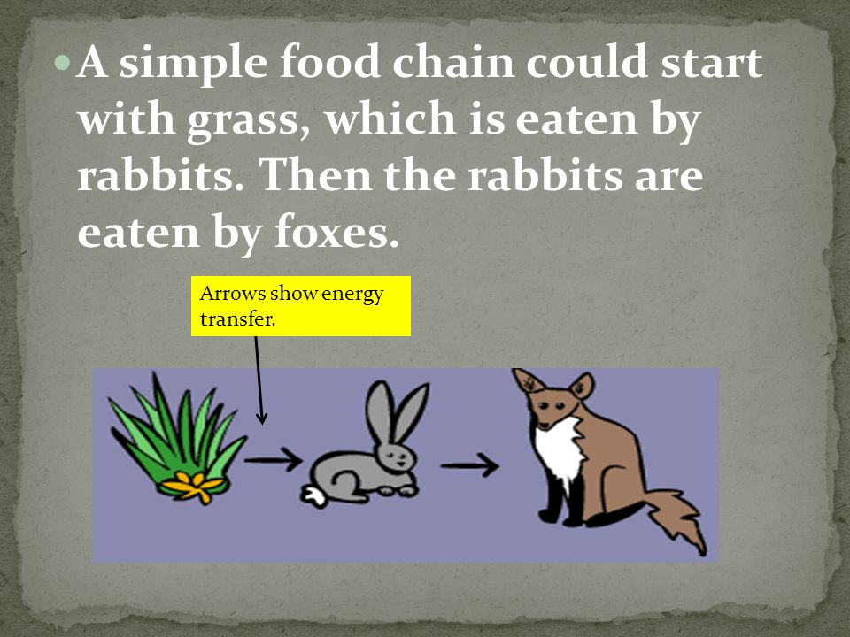 A simple food chain could start with grass, which is eaten by rabbits.