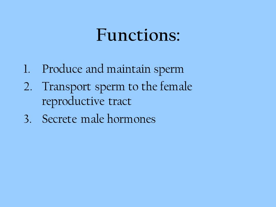 Male Reproductive System Functions 1oduce And Maintain Sperm 2