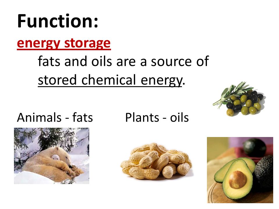 Function: energy storage fats and oils are a source of stored chemical energy.