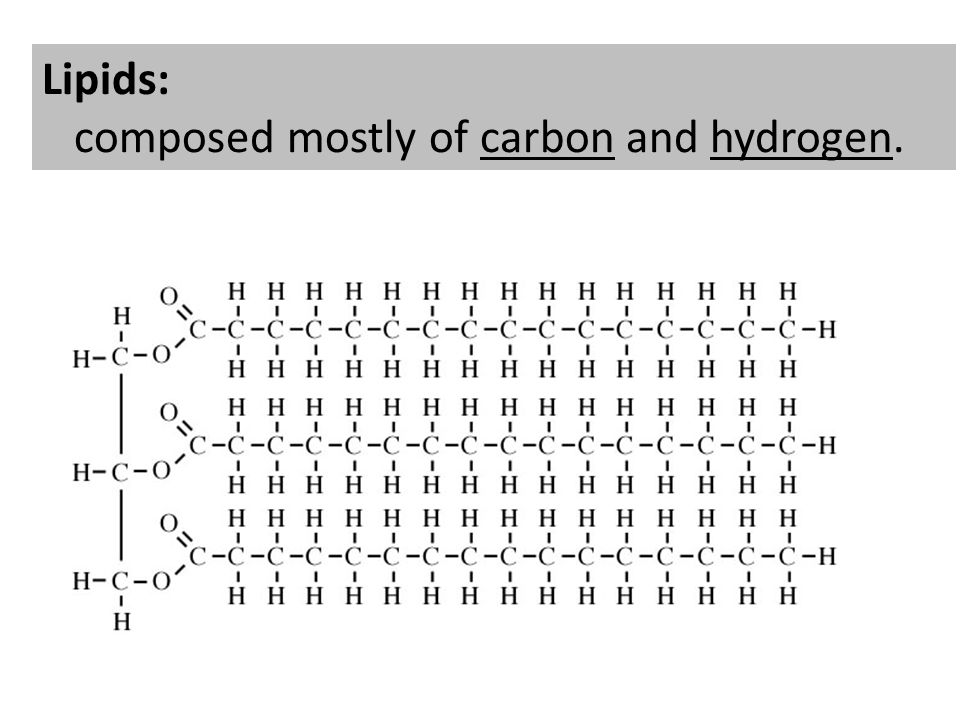 Lipids: composed mostly of carbon and hydrogen.