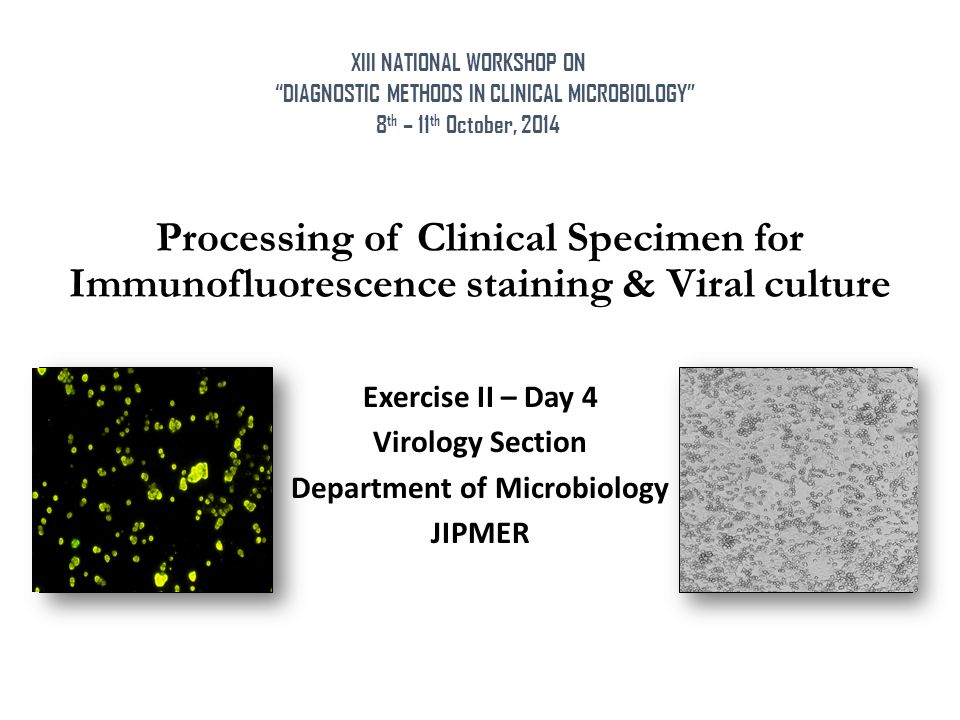 Processing of Clinical Specimen for Immunofluorescence