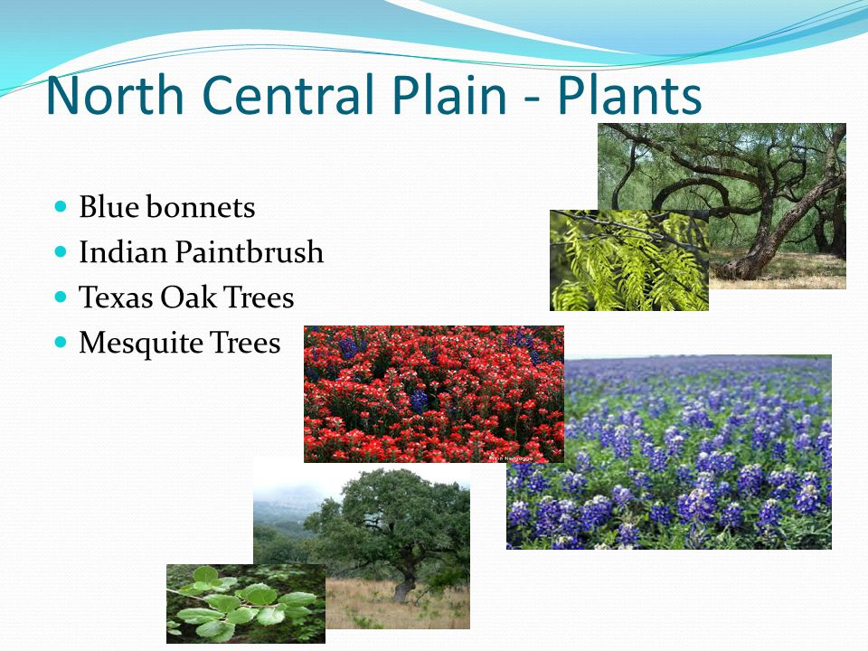 Can You Name The Regions Of Texas Cp Ncp Gp Mb Gulf Coastal Plain