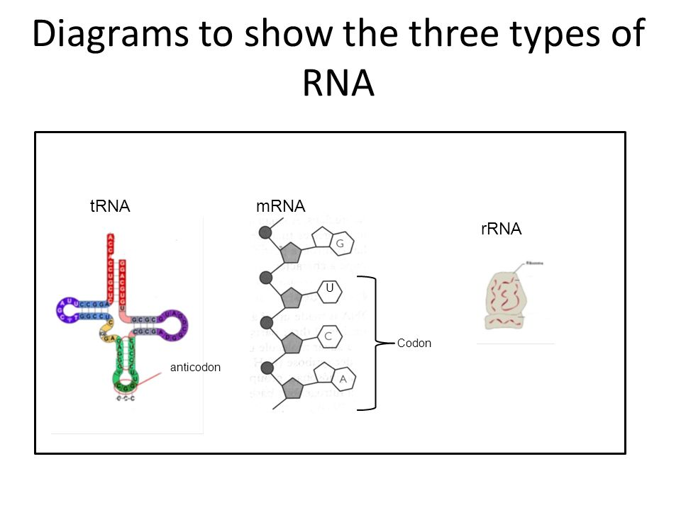 slide_8 why do we need rna molecule for coding? nucleus membrane has small
