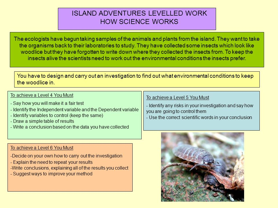 science woodlice coursework
