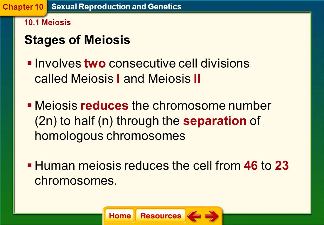 Meiosis  Meiosis is a special type of cell division that produces gametes.