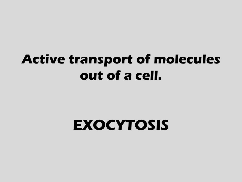 Active transport of molecules out of a cell. EXOCYTOSIS