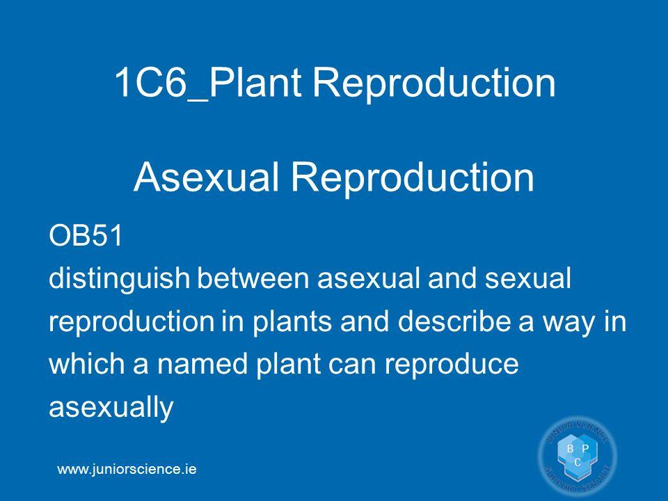 Gcse bitesize asexual reproduction