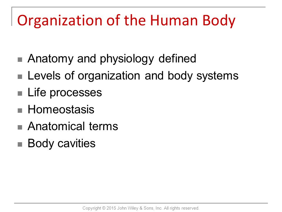 Introduction to the Human Body Tenth Edition Gerard J. Tortora Bryan ...