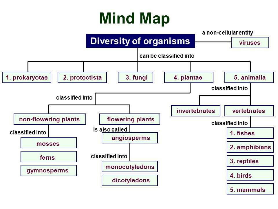 Image of: Matriculation Mind Corat Coret Aida Mind Map Act As Chemical Substances Found In The Organisms Act As