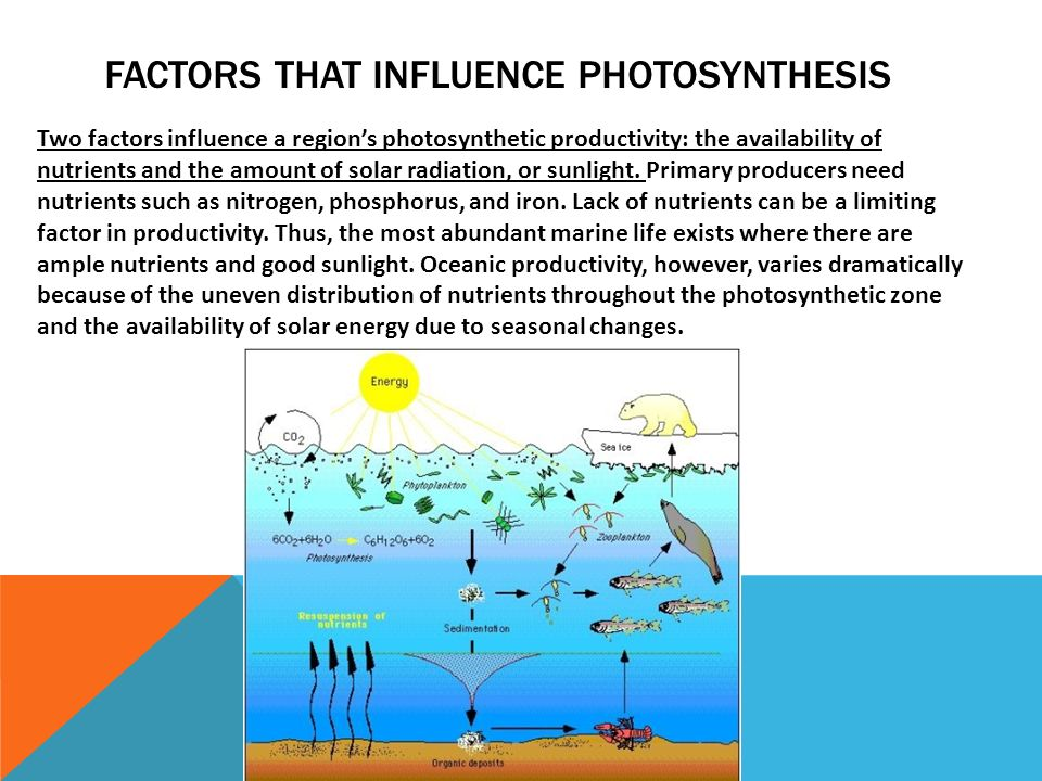 factors that influence photosynthesis