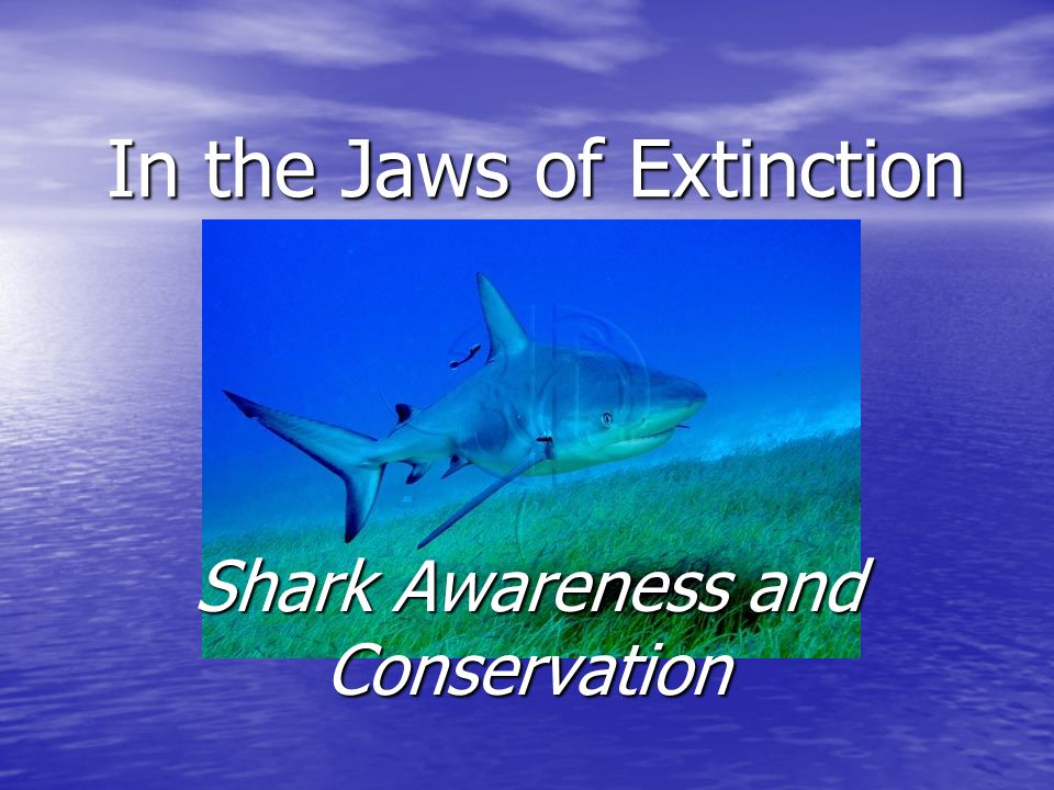 In the Jaws of Extinction Shark Awareness and Conservation