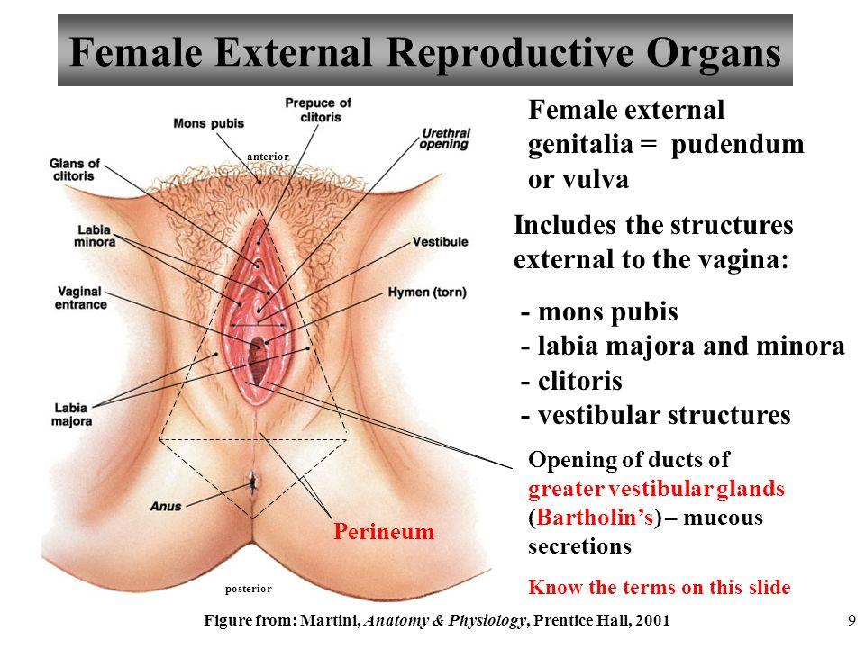 The Video And Narration In This Presentation Concerns The Female