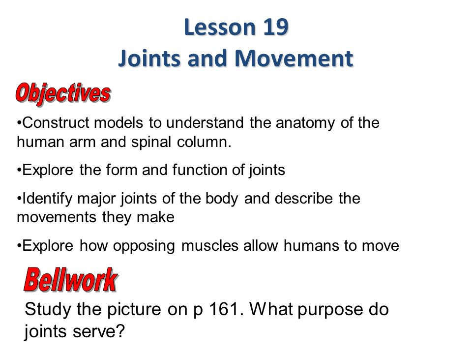 Construct Models To Understand The Anatomy Of The Human Arm And