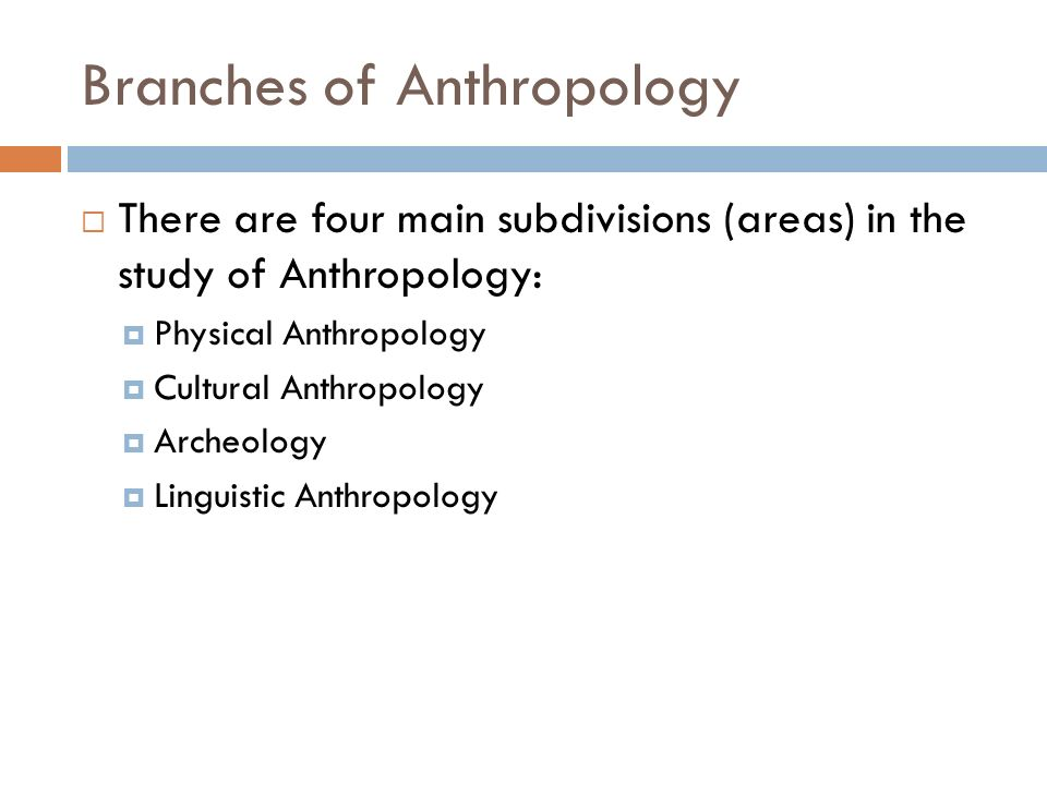 main branches of anthropology