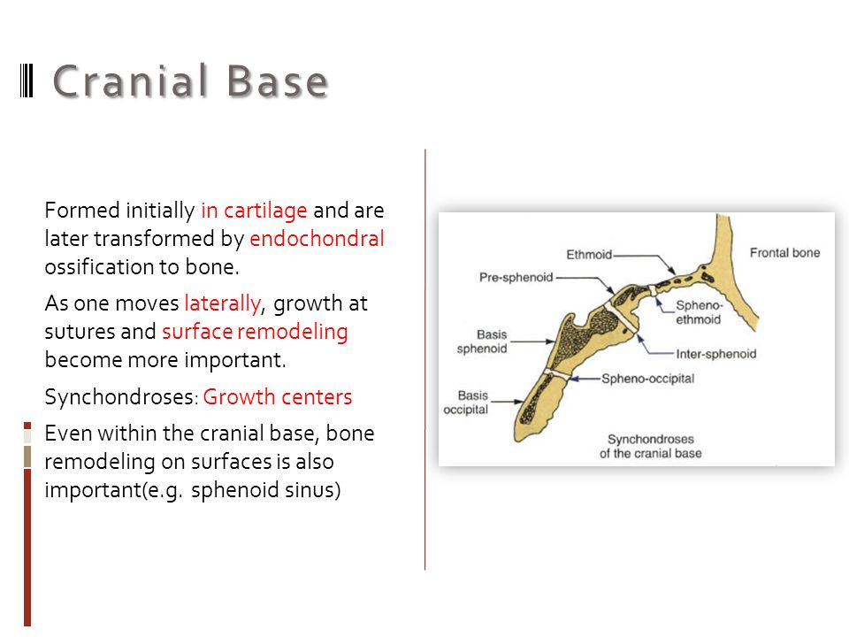 Sites And Types Of Growth Dr Majid Heidarpour Basic Concepts 1 The Sites Or Location Of Growth 2 The Type Of Growth Occurring At That Location Ppt Download Examining the degree of fusion in a south african black skeletal sample. sites and types of growth dr majid