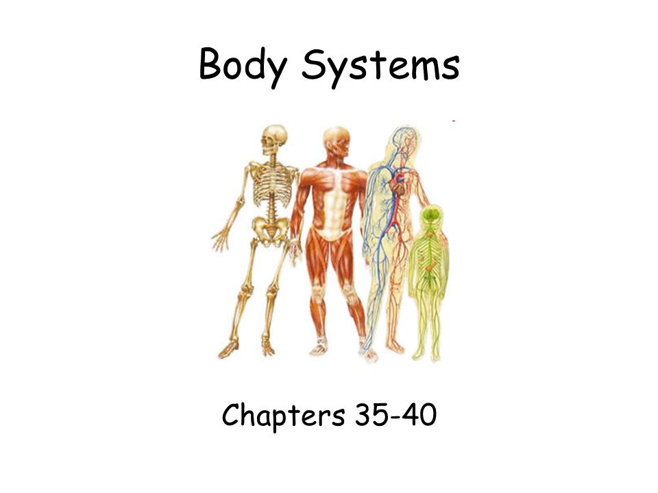 Body Systems Chapters Organization Of The Body Nervous System