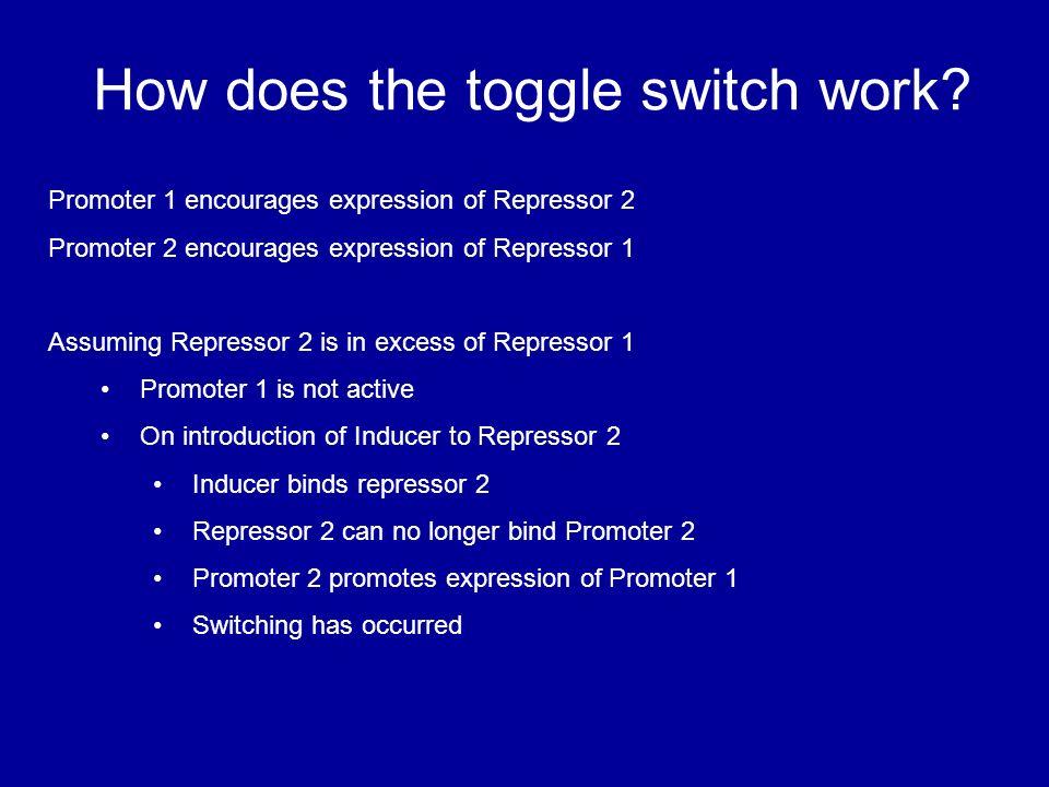Construction of a genetic toggle switch in Escherichia coli Farah ...