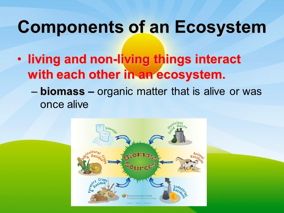 Energy Flow In Ecosystems Components Of An Ecosystem Living And Non Living Things Interact With Each Other In An Ecosystem Living And Non Living Things Ppt Download