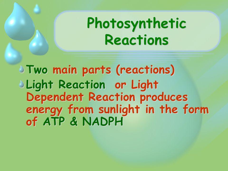 Photosynthesis Energy Life Biology I Energy Life Where