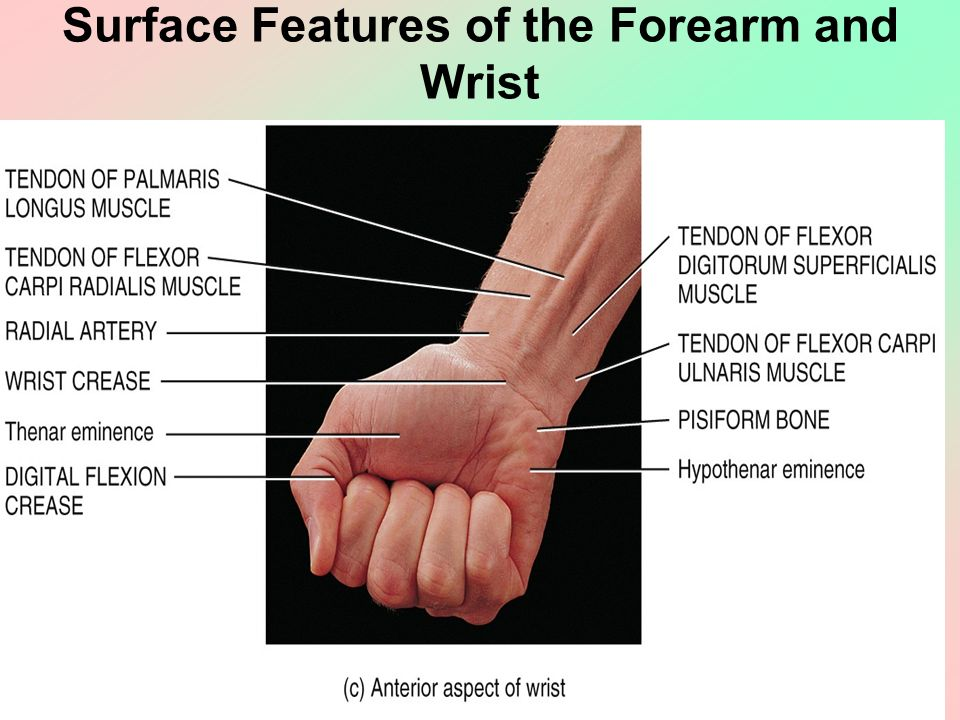 Clinical Examination Of The Hand And Wrist Objectives Review The