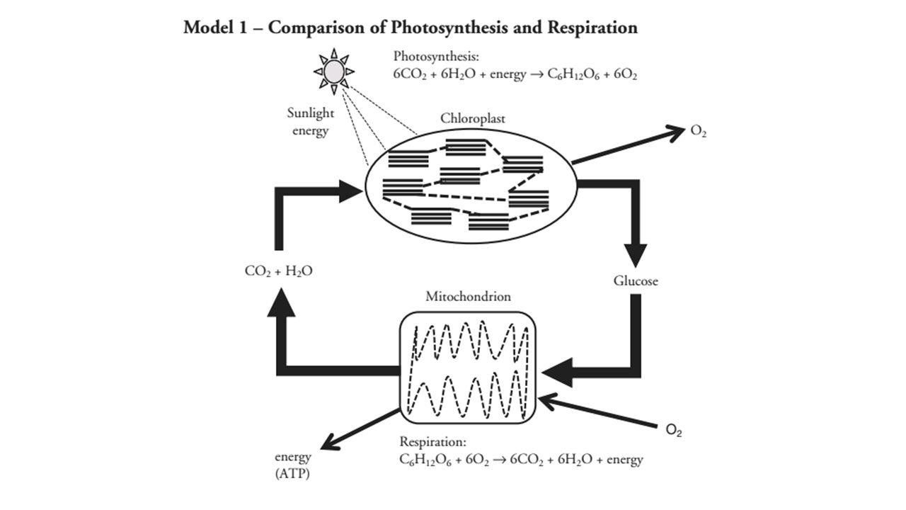 Unit 4 – Cell Energetics Exploration and Introduction to ...