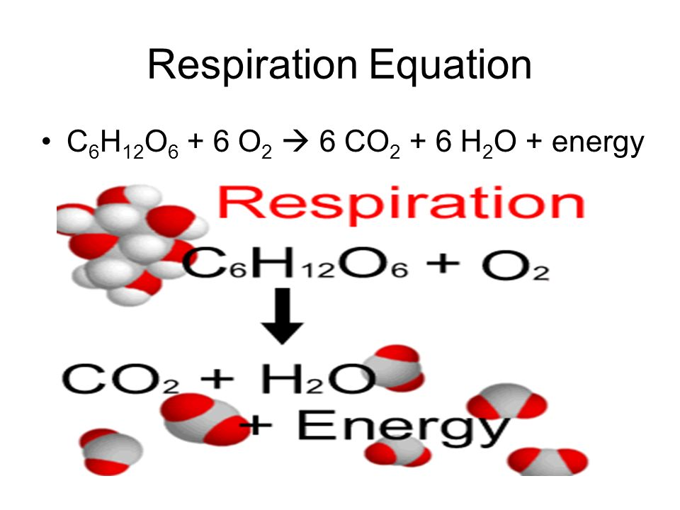 Respiration Equation C 6 H 12 O O 2  6 CO H 2 O + energy