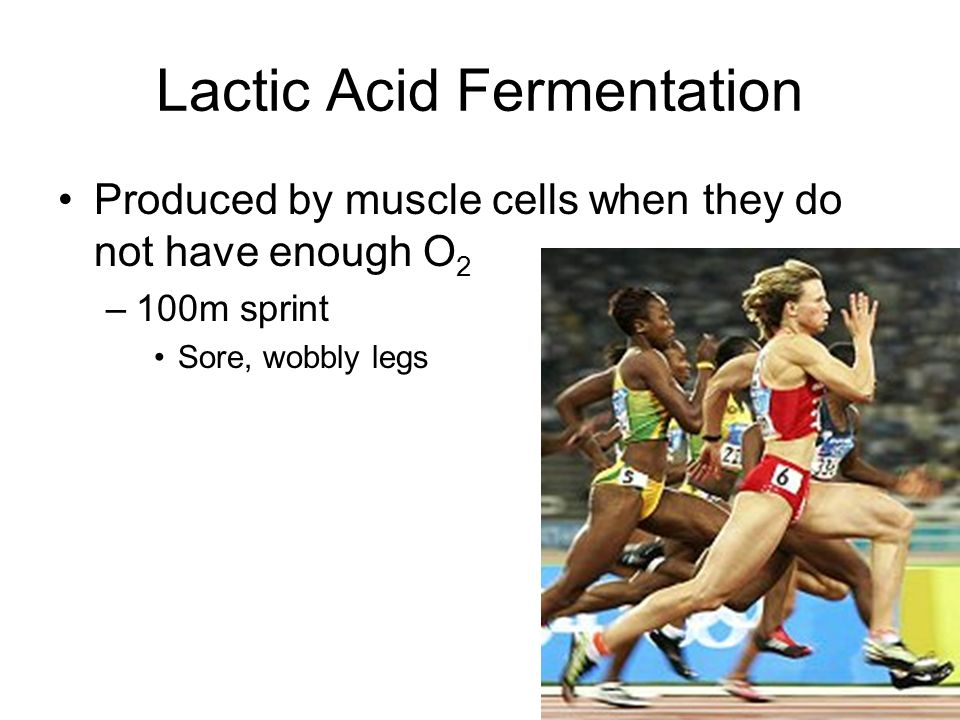 Lactic Acid Fermentation Produced by muscle cells when they do not have enough O 2 –100m sprint Sore, wobbly legs