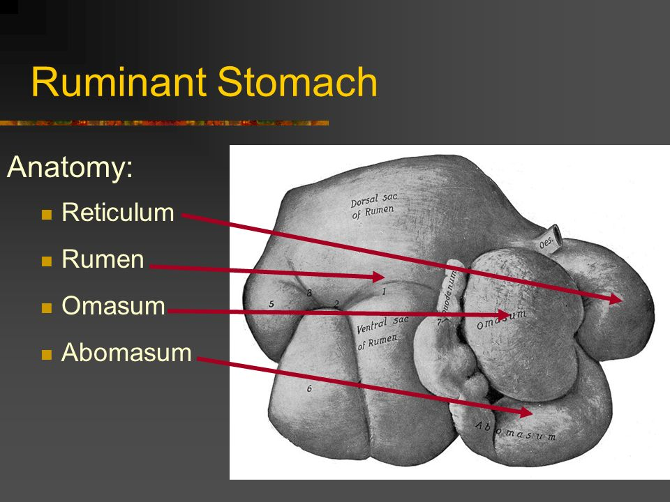 Daily Food For Thought Trace And Name The Parts Of The Monogastric