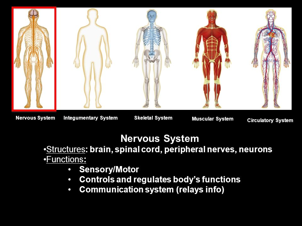 Human Body Systems. Levels of Organization Cells Tissues Organs ...