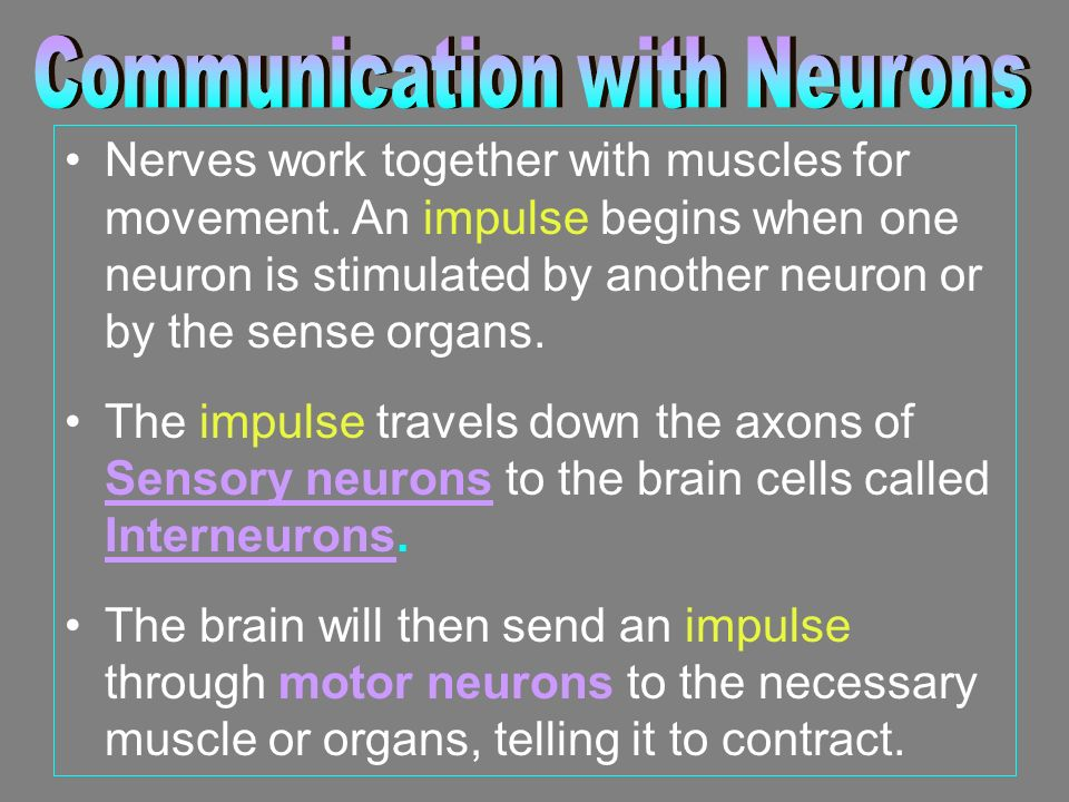 Nerves work together with muscles for movement.