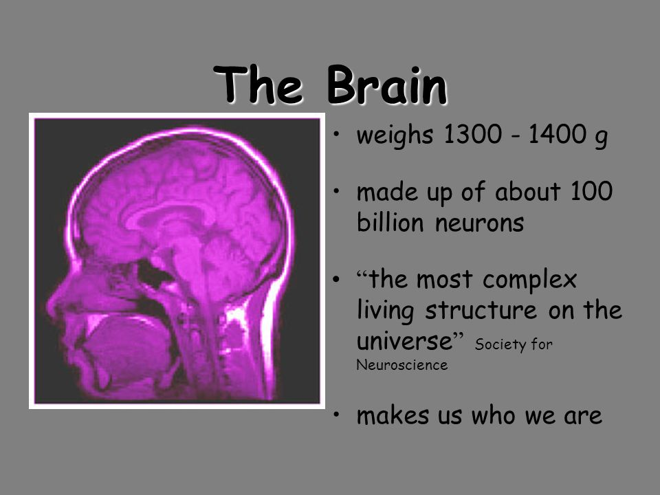 The Brain weighs g made up of about 100 billion neurons the most complex living structure on the universe Society for Neuroscience makes us who we are