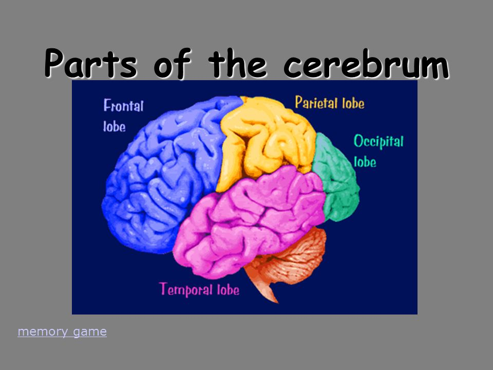 Parts of the cerebrum memory game