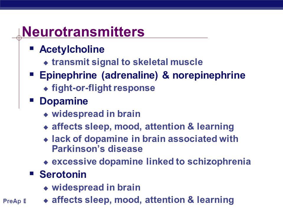 PreAp Biology Neurotransmitters  Acetylcholine  transmit signal to skeletal muscle  Epinephrine (adrenaline) & norepinephrine  fight-or-flight response  Dopamine  widespread in brain  affects sleep, mood, attention & learning  lack of dopamine in brain associated with Parkinson's disease  excessive dopamine linked to schizophrenia  Serotonin  widespread in brain  affects sleep, mood, attention & learning