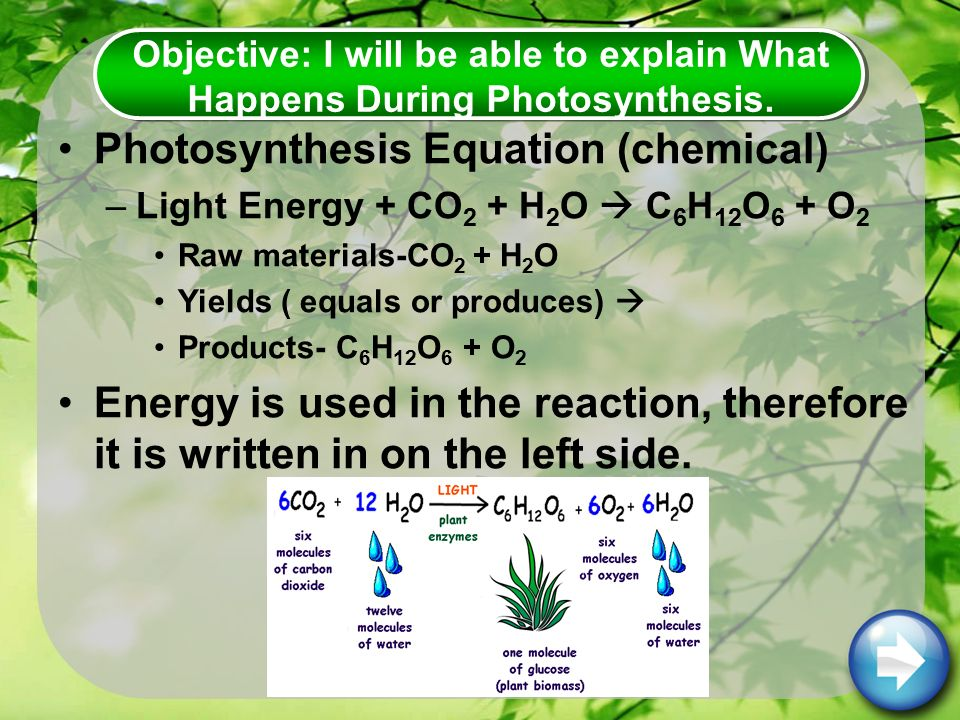 Photosynthesis Equation (chemical) –Light Energy + CO 2 + H 2 O  C 6 H 12 O 6 + O 2 Raw materials-CO 2 + H 2 O Yields ( equals or produces)  Products- C 6 H 12 O 6 + O 2 Energy is used in the reaction, therefore it is written in on the left side.