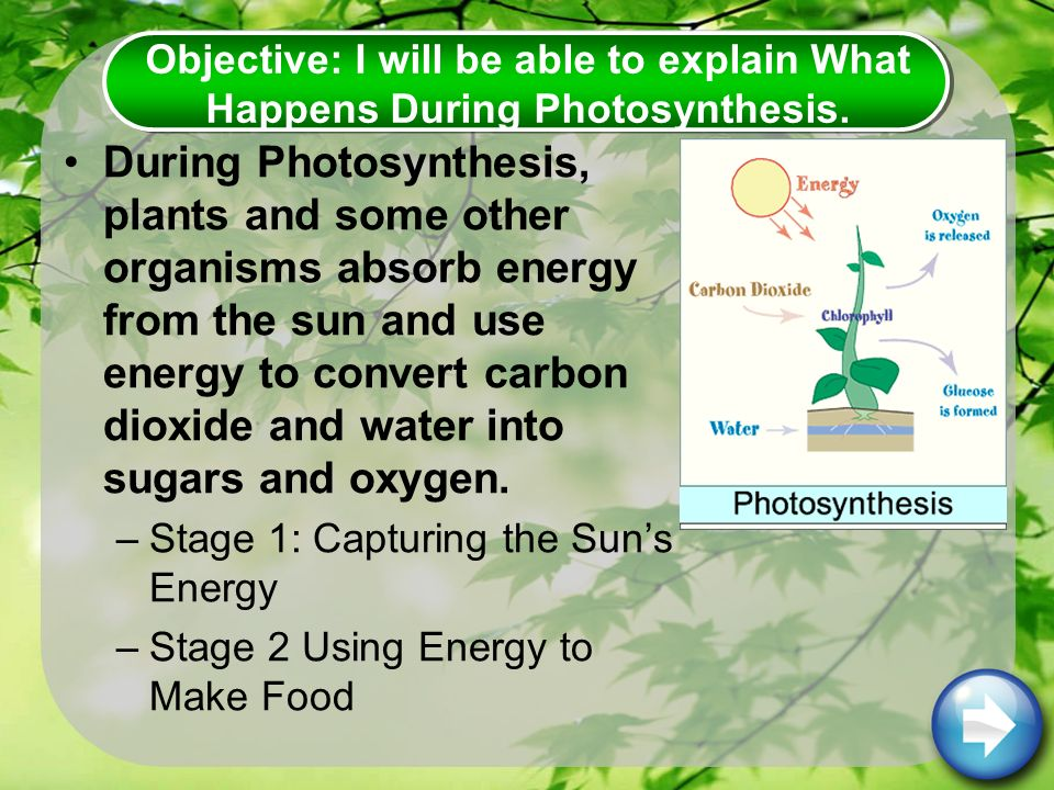 During Photosynthesis, plants and some other organisms absorb energy from the sun and use energy to convert carbon dioxide and water into sugars and oxygen.