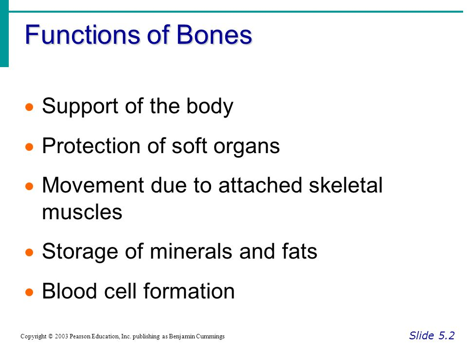 Functions of Bones Slide 5.2 Copyright © 2003 Pearson Education, Inc.