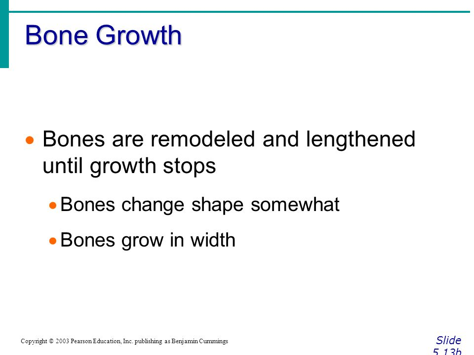 Bone Growth Slide 5.13b Copyright © 2003 Pearson Education, Inc.