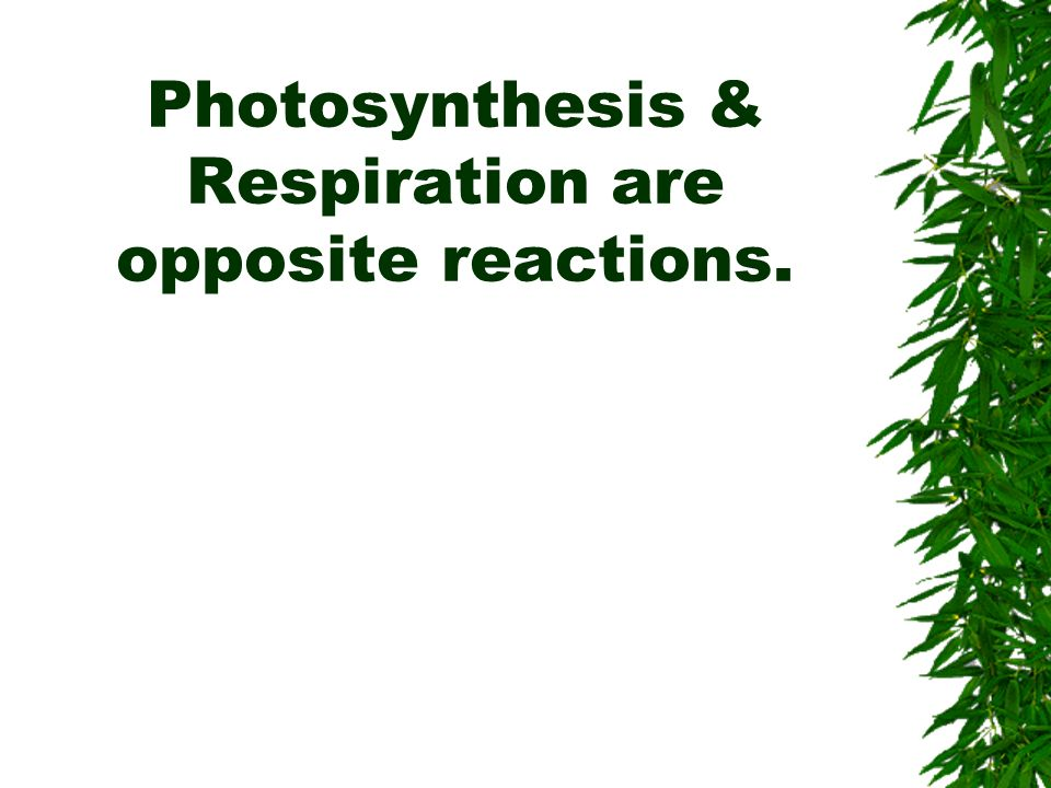 Photosynthesis & Respiration are opposite reactions.