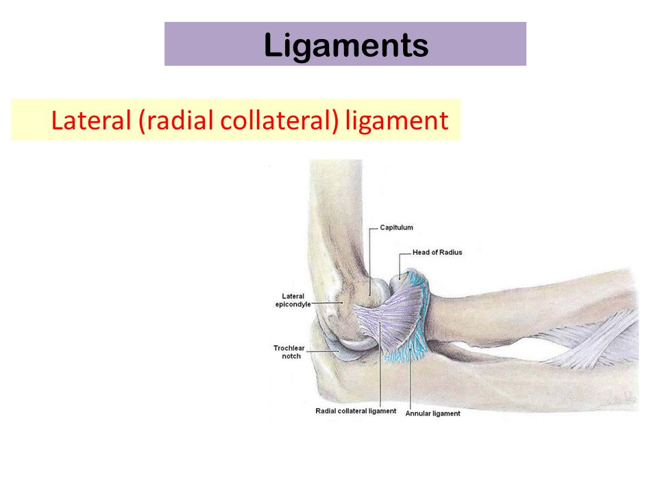 Elbow Joint Dr Rania Gabr Elbow Join T Articulation Above