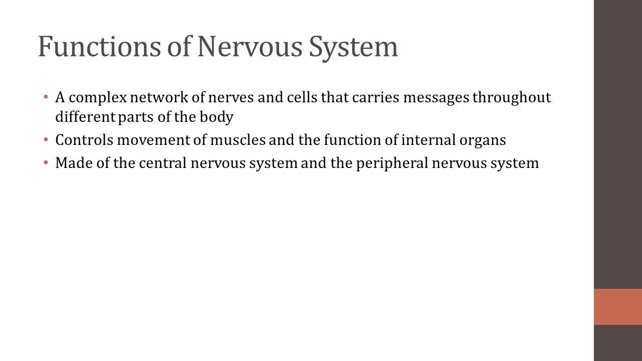 Nervous System Heidi Bien Ap Biology Functions Of Nervous System A
