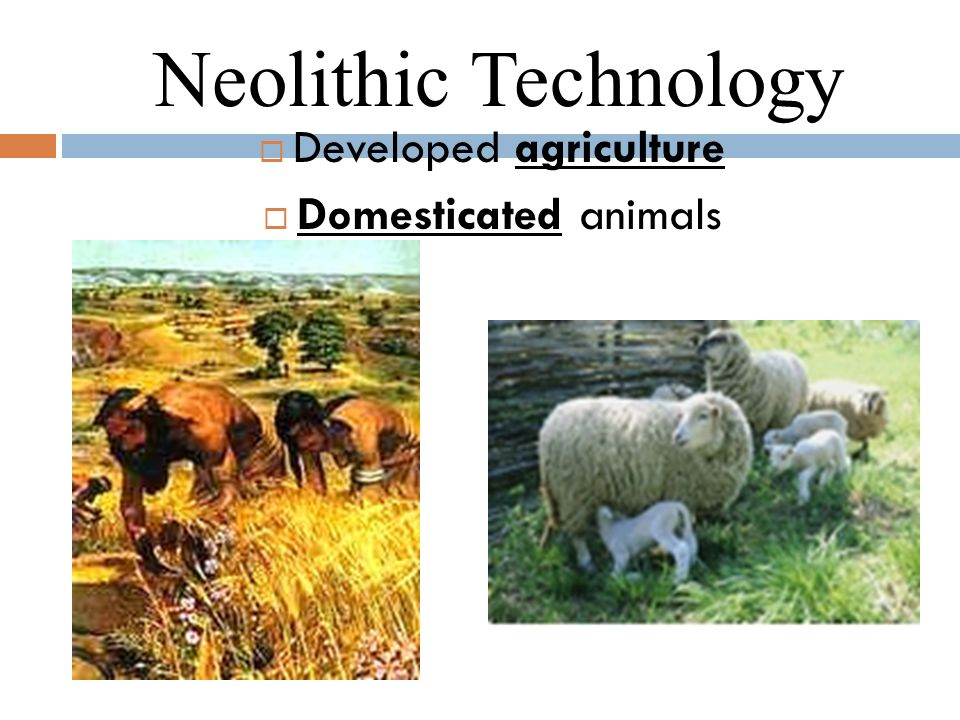 neolithic technology
