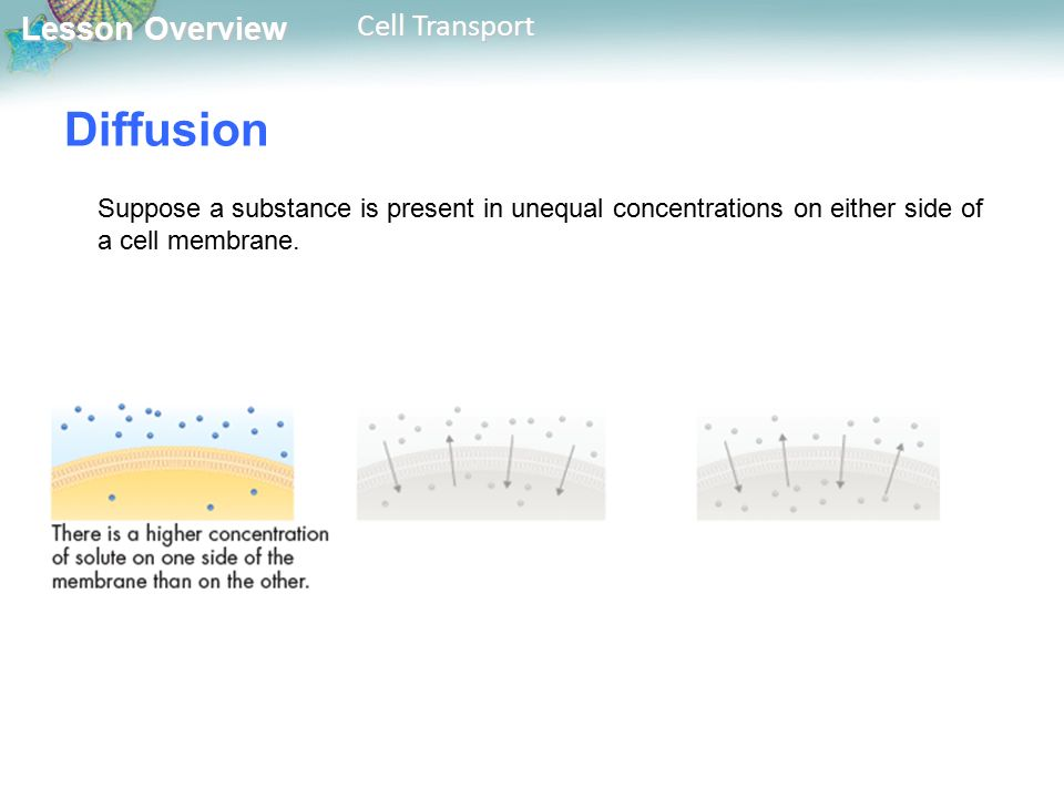Lesson Overview Lesson Overview Cell Transport Diffusion Suppose a substance is present in unequal concentrations on either side of a cell membrane.