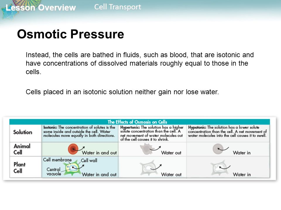 Lesson Overview Lesson Overview Cell Transport Osmotic Pressure Instead, the cells are bathed in fluids, such as blood, that are isotonic and have concentrations of dissolved materials roughly equal to those in the cells.