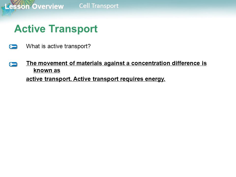 Lesson Overview Lesson Overview Cell Transport Active Transport What is active transport.