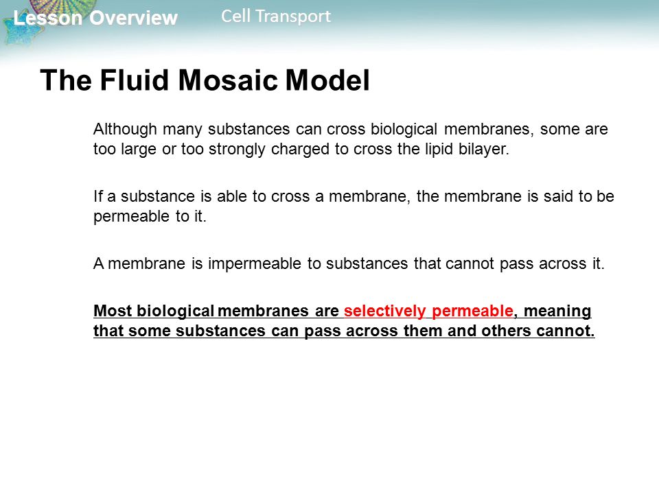 Lesson Overview Lesson Overview Cell Transport The Fluid Mosaic Model Although many substances can cross biological membranes, some are too large or too strongly charged to cross the lipid bilayer.