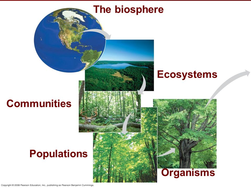 Communities Populations Organisms Ecosystems