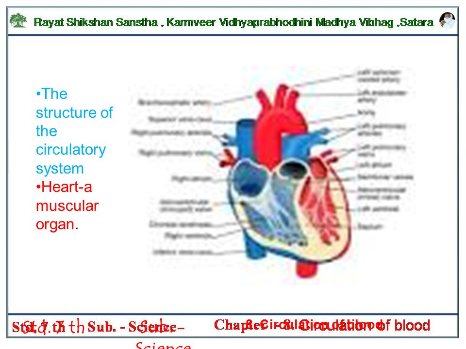 Std 7 Th Sub Science 8 Circulation Of Blood Blood