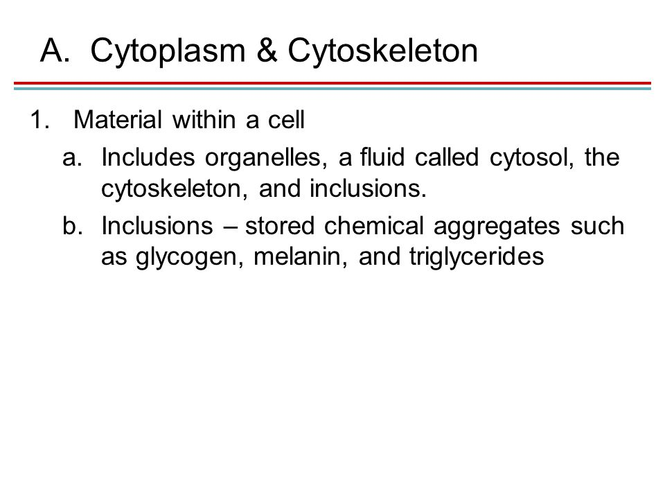 A.Cytoplasm & Cytoskeleton 1.Material within a cell a.Includes organelles, a fluid called cytosol, the cytoskeleton, and inclusions.