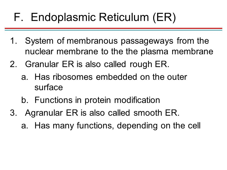 F.Endoplasmic Reticulum (ER) 1.System of membranous passageways from the nuclear membrane to the the plasma membrane 2.Granular ER is also called rough ER.