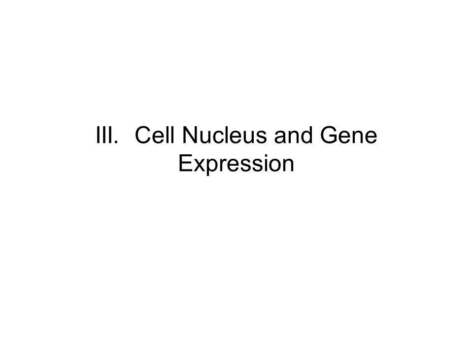 III. Cell Nucleus and Gene Expression